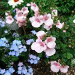 安全な防虫で収穫の喜び!かわいい花…雑草なのか?