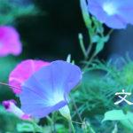 【文月】ていねいに暮らす-7月の旬の食材は夏バテ対策を!