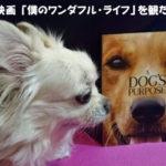輪廻転生があるのなら出逢った動物達に逢いたい「僕のワンダフル・ライフ」犬の映画より