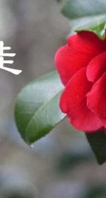 【師走】12月は忘年会シーズン!あったかい旬のモノを食べて健康に気をつける!丁寧な暮らし!