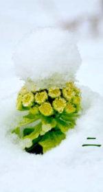 二十四節気の春【雨水-うすい】2/19~3/4日頃に気をつける体を整える生活と食べ物とは