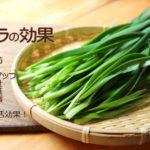韮(にら)は薬効が高く常食したい!風邪・花粉症予防の万能調味料ニラ味噌・疲労回復などレシピ5選