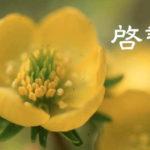 二十四節気【啓蟄】3/6~21日頃に気をつけること!体を整える生活と食べ物