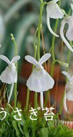 """うさぎの姿をした""""うさぎ苔""""や""""多肉植物""""が可愛すぎる!植物と接するとゆったりと時間が流れる"""