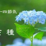 二十四節気の夏【芒種-ぼうしゅ】6/6~6/20頃:血行障害と体内の湿気に注意!