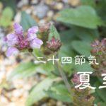 二十四節気の夏【夏至-げし】6/21~7/6頃:薬膳のあずきがおすすめ!