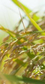 二十四節気の秋【寒露-かんろ】10/8~10/22頃:体と心をリラックスさせ気温差に気をつける