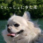 動物の旅立ちや別れの様々な事情|愛犬若葉といっしょに歩む道