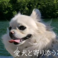 動物・愛犬と寄り添う暮らし*愛しい気持ち